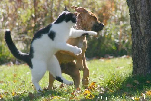 動物面白画像】 ボクシング?